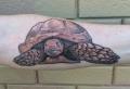 Les beaux designs pour tatouage tortue – plongez dans le monde grâcieux de ta tortue de mer
