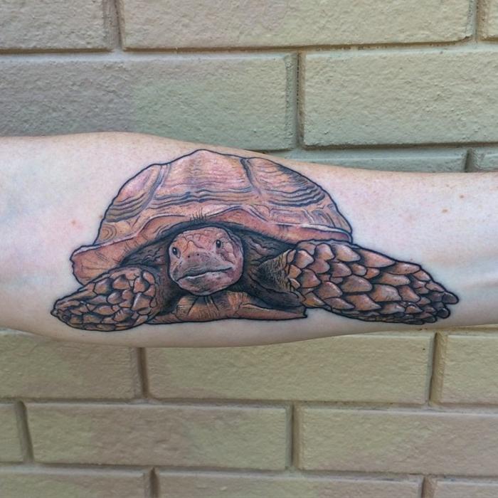 tatouage avant-bras homme, tortue réalistique, tortue terrestre tatouée à l'avant-bras