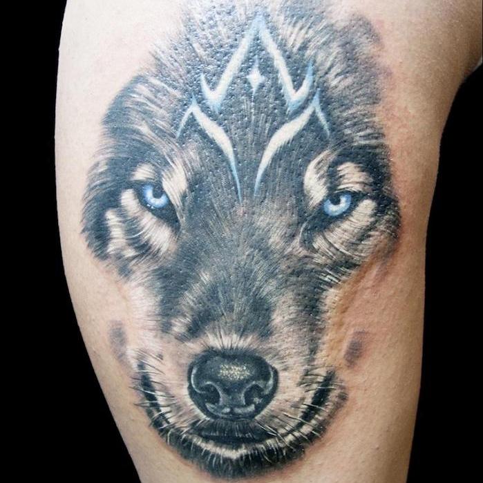 tatouage animaux, dessin tête de loup aux yeux bleus, idée tatouage symbolique avec animal