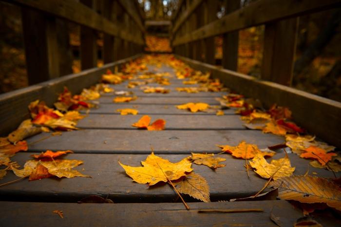 automne paysage fond d'écran hd, feuilles jaunes sur un pont en bois