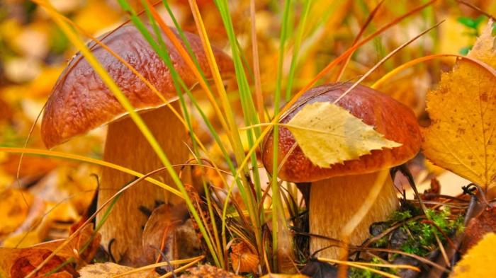 automne paysage fond d'écran hd, herbe coloré en plusieurs teintes et deux champignons
