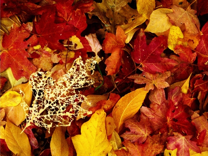 paysage automne fond d'écran hd, jolie image pour fond d'écran avec feuilles rouges et jaunes