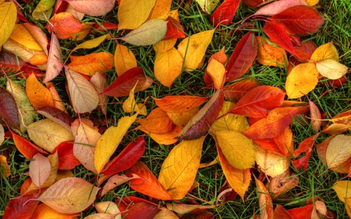 automne paysage fond d'écran hd, feuilles tombées sur le sol en couleurs différentes
