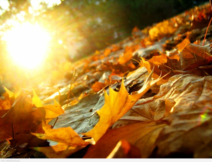 automne paysage fond d'écran hd, le soleil qui brille et les feuilles jaunes