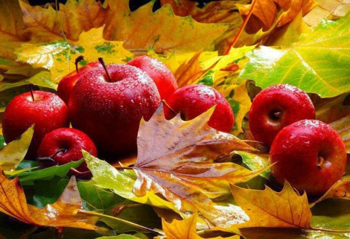automne paysage fond d'écran hd, nature morte avec des pommes et des feuilles