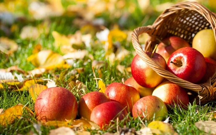 automne paysage fond d'écran hd, pelouse verte, panier, pommes rouges