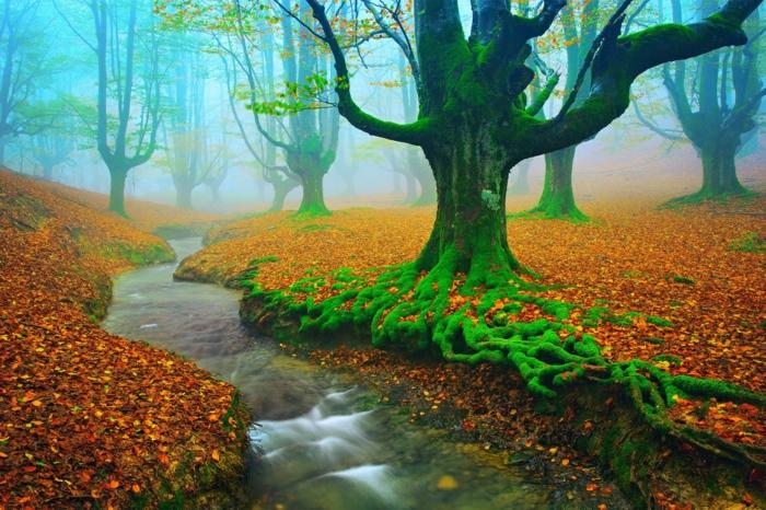 automne paysage fond d'écran hd, forêt mystérieux, paysage énigmatique