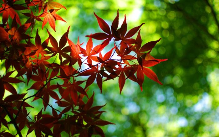 """beau fond d""""écran, photo d'automne aux couleurs flattantes, les feuilles d'un arbre"""