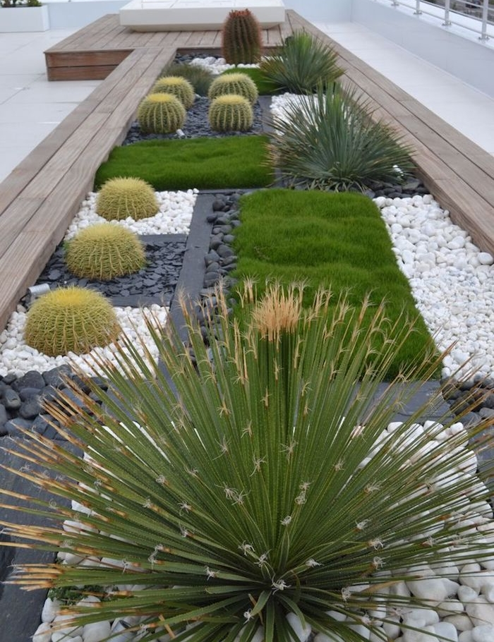 plantes grasses, déco de jardin en longueur, cactus verts sur parterre de cailloux et galets blancs e noirs