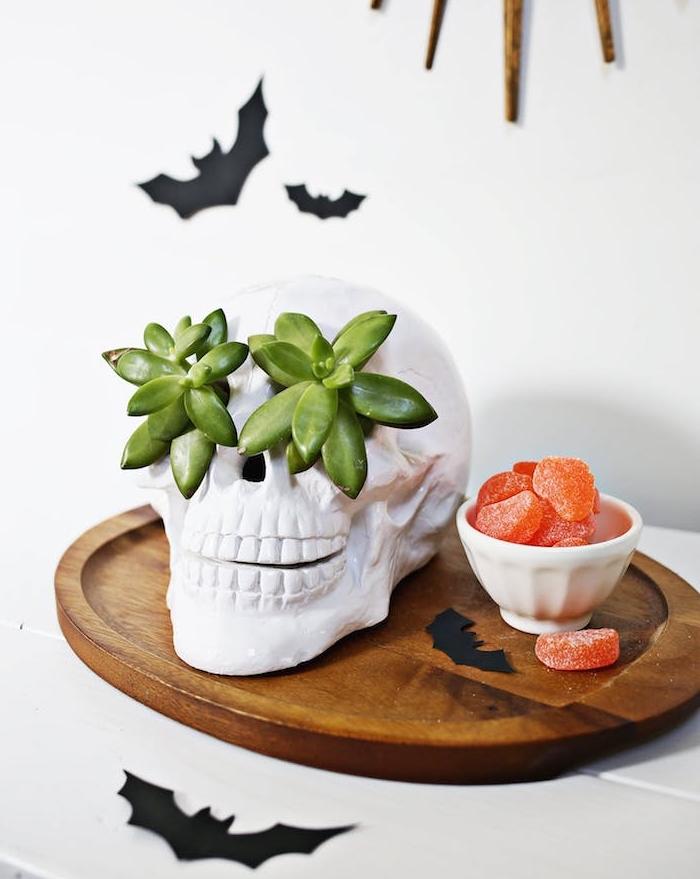 une crâne décorative avec des succulents dans les orbites des yeux, des silhouettes de chauve souris en papier