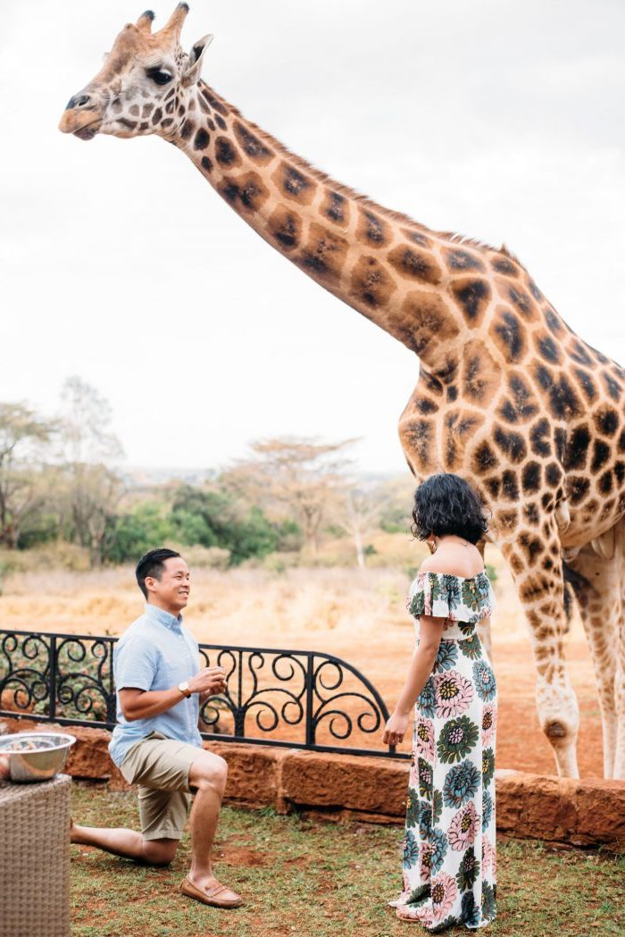demande en mariage originale au cours d un voyage en afrique, visite des girafes, parc exotique, proposition originale