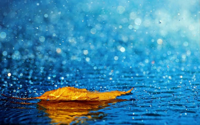 fond d'écran automne, lac au-dessous de la pluie et feuille jaune flottant sur lui