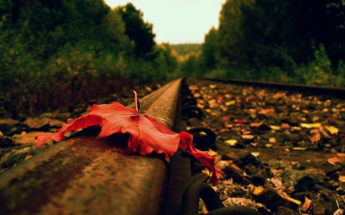 fond d'écran automne, jolie composition avec une feuille rouge sur les rails