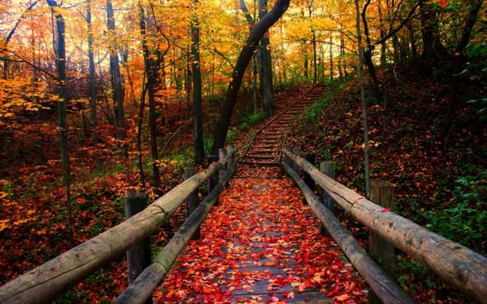 fond d'écran automne, allée en bois avec des feuilles rougies en automne, forêt magique
