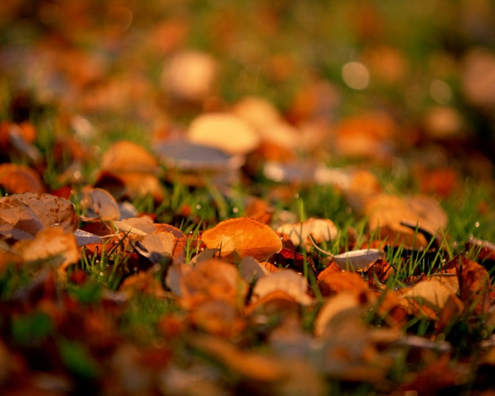 fond d'écran automne, clairière verte avec des feuilles jaunes, images pour le desktop