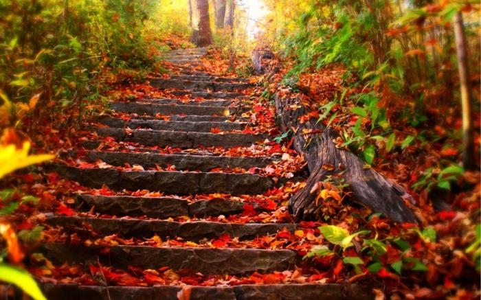 fond d'écran gratuit automne, escalier menant vers l'intérieur de la forêt couvert de feuilles rouges