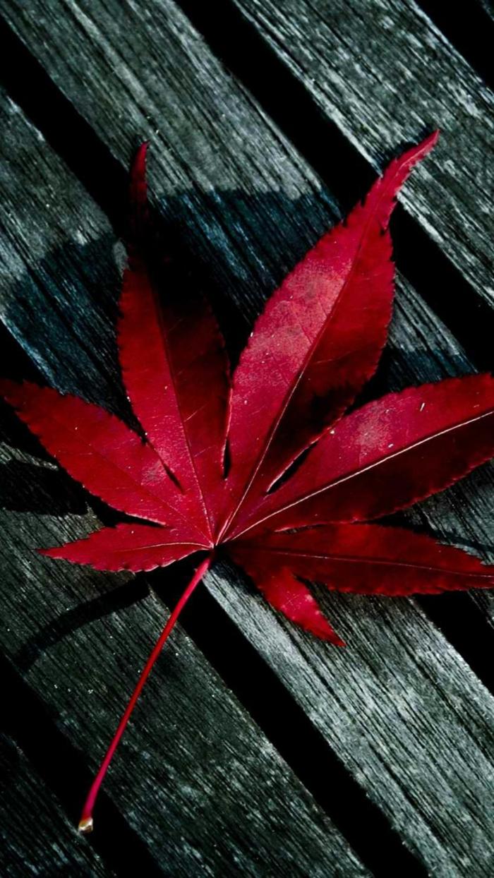 fond d'écran gratuit automne, feuille rouge juchée sur un banc ancien
