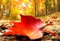 Les plus belles images d'automne pour fond d'écran – découvrez-les ici!