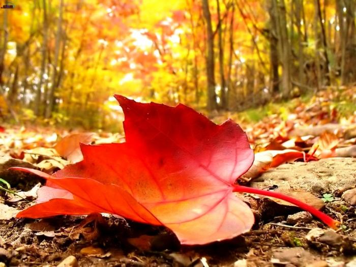 fond d'écran gratuit automne, une feuille tombée dans la forêt, composition originale