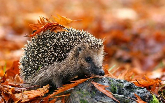 Image D Animaux Pour Fond D Écran ▷ 1001 + jolies exemples d'images d'automne pour fond d'écran