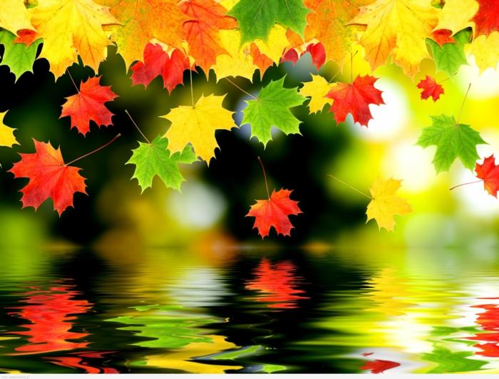 fond d'écran gratuit automne, composition de feuilles pendant l'automne