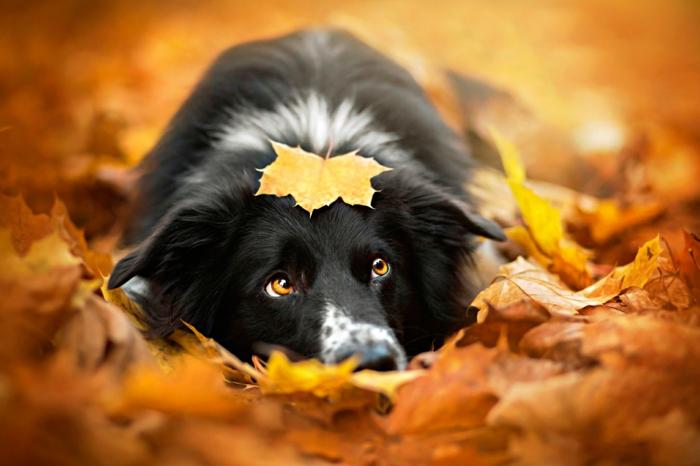 1001 jolies exemples d 39 images d 39 automne pour fond d 39 cran for Fond ecran gratuit noel pour ordinateur