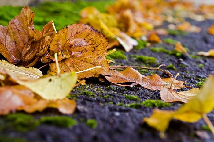 fond d'écran gratuit, la terre humide pendant l'automne et des feuilles jaunes