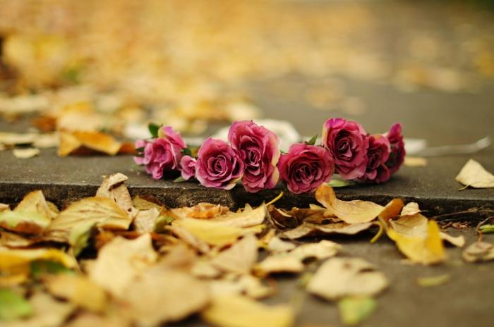 fond d'écran gratuit pour ordinateur, bouquet de roses rouges sur le trottoir