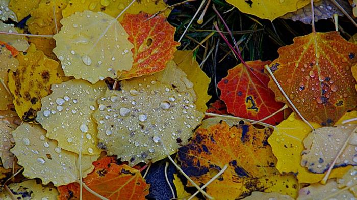 fond d'écran gratuit pour ordinateur, feuilles couvertes de gouttes de pluie