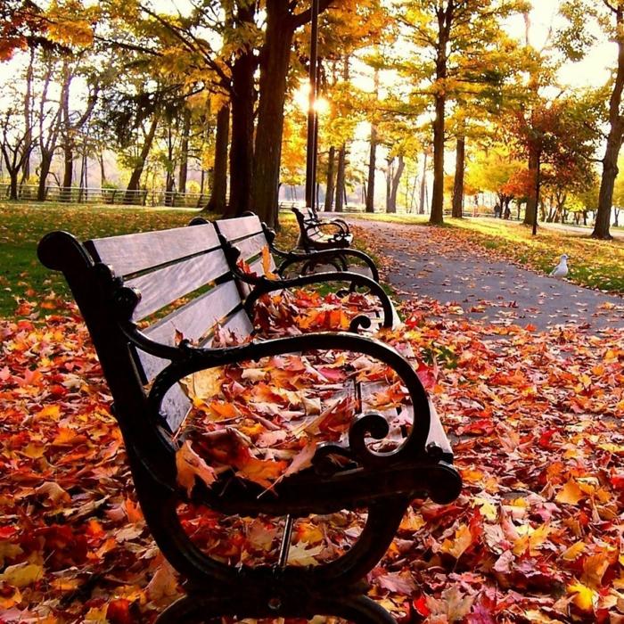 fond d'écran hd paysage, banquette en bois, des feuilles rouges sur ele banc dans un parc