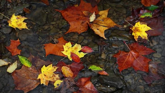 fond d'écran hd paysage, feuilles en couleurs variées qui flottent sur l'eau