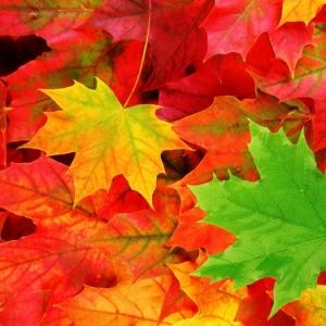 Les plus belles images d'automne pour fond d'écran - découvrez-les ici!
