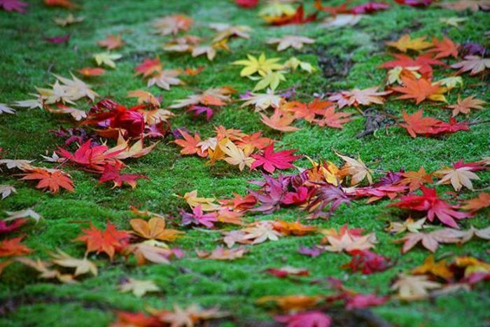 fond d'écran hd paysage, jolie clairière verte avec des feuilles rouges et jaunes