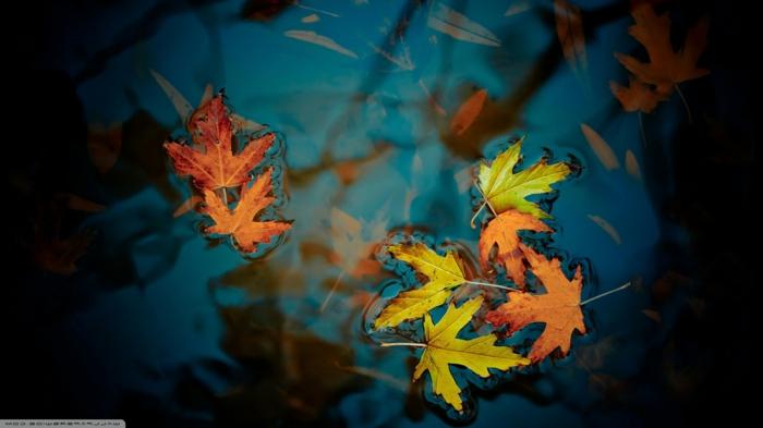 fond d'écran hd paysage, feuilles tombées dans l'eau bleue en couleurs d'automne