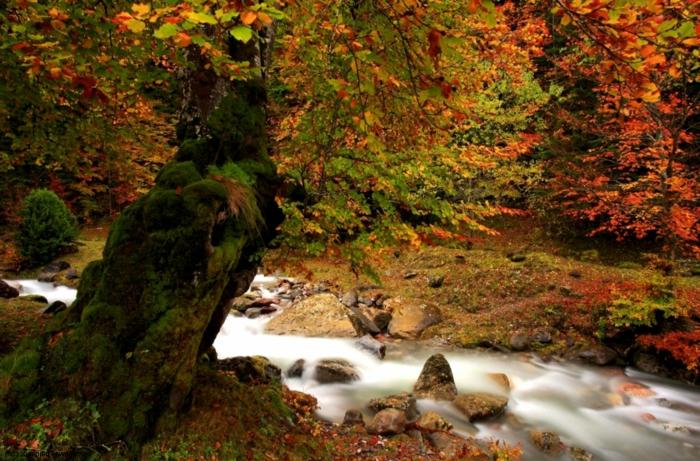 fond d'écran hd paysage, rivière qui passe par la forêt et arbre couvert de mousse verte