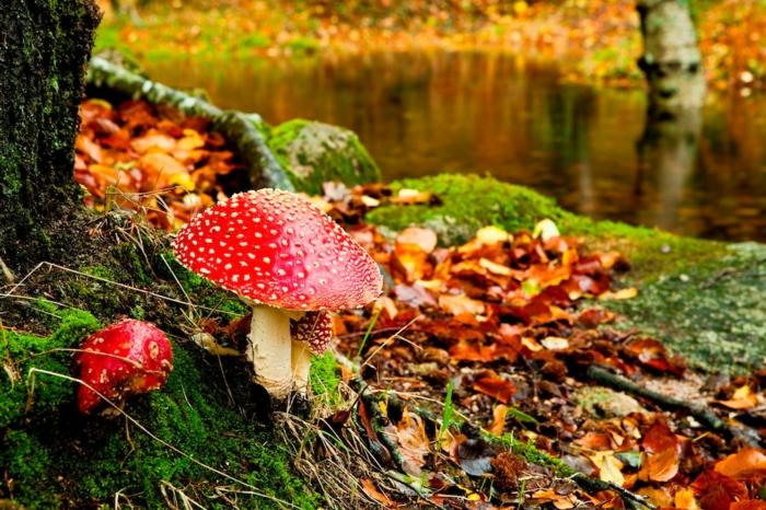fond ecran automne, champignon rouge dans une forêt serène avec rivière