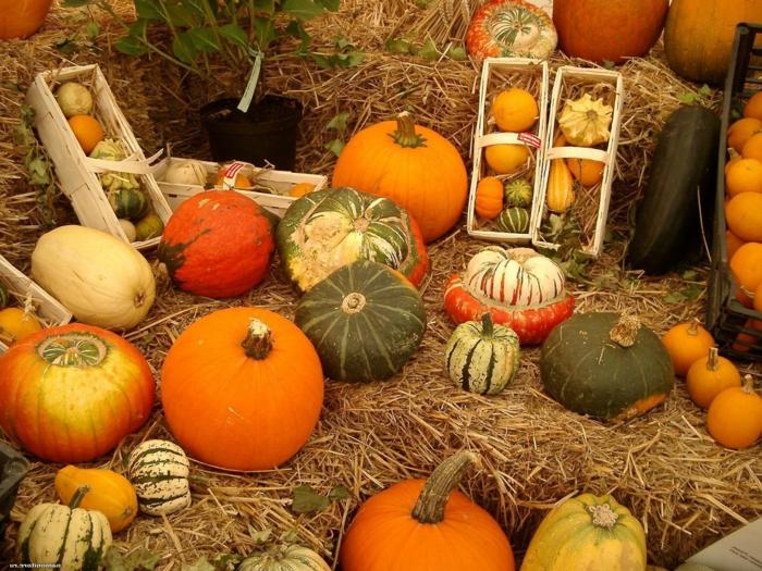 fond ecran automne, nature morte de citrouilles oranges et de ballots de paille