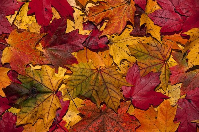 fond ecran automne, un tapis de feuilles tombées, jolie image d'automne