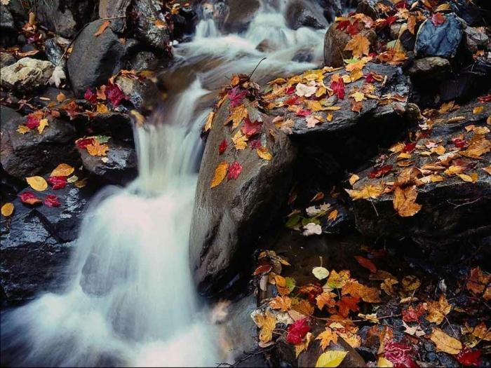 fond ecran paysage, chute d'eau sur les rochers, des feuilles colorées sur les pierres
