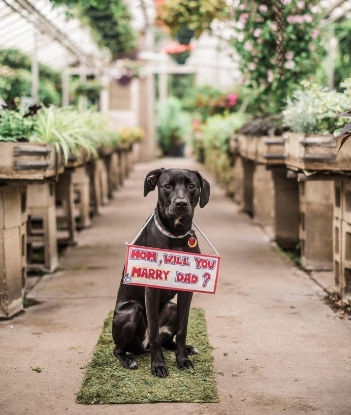 idée de demande en mariage insolite avec chien noir qui porte une pancarte veux-tu épouser mon papa dans une serre fleurie