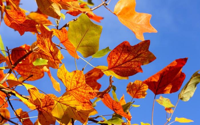images automne, composition de feuilles d'une branche et du ciel bleu