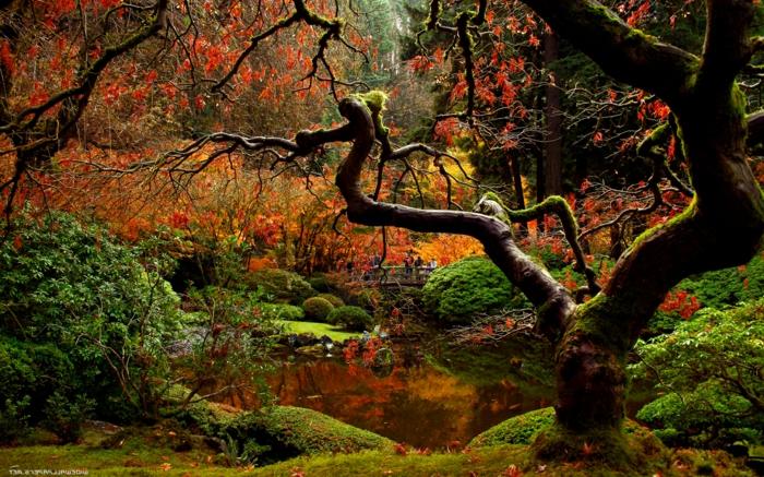 images automne, arbre unique situé près d'un fleuve dans la forêt