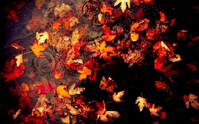 images automne, feuilles flottantes sur l'eau calme, couleurs contrastantes