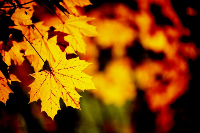 images automne, feuilles jaunes en une couleur magnifique, jolie saison dans la forêt