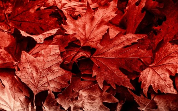 images automne, la nature à la fin de l'été, feuilles rouges en couleur intense