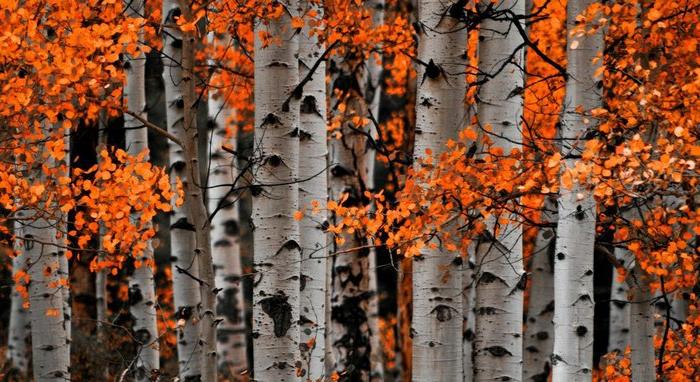 images automne,