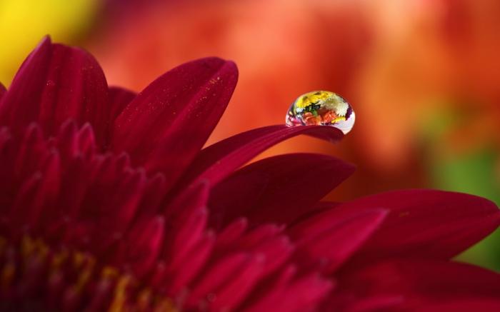images automne, une image macro de fleur rouge et d'une petite goutte