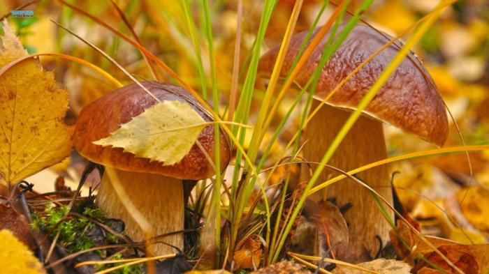 images automne, champignons jolies qui ont pris les couleurs de leur milieu