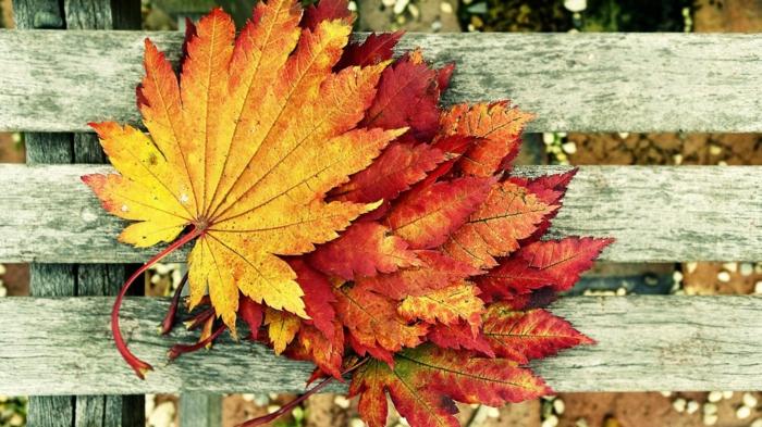 images d'automne pour fond d'écran, jolies feuilles comme sujet d'une photographie
