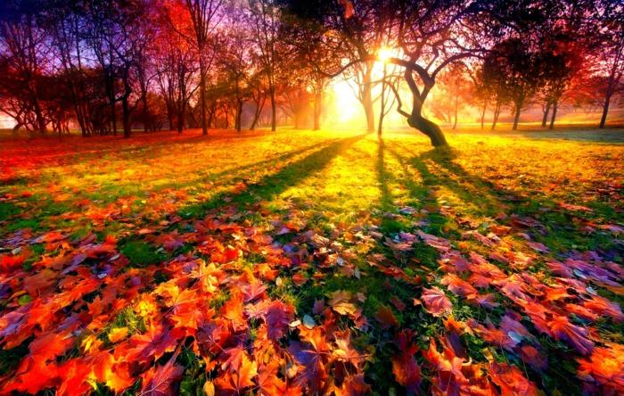 automne paysage fond d'écran hd,soleil couchant au-dessus d'une clairière